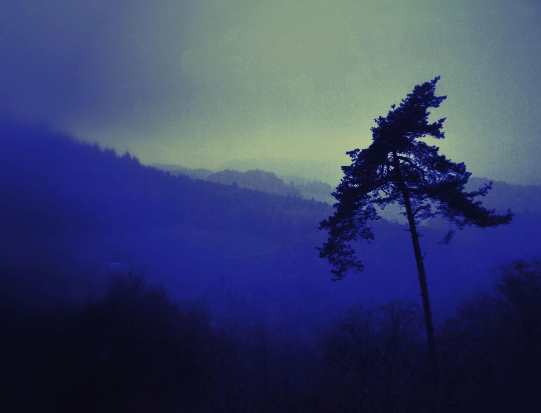 Eckhard Ischebeck Gewächse - Landschaft in Blau