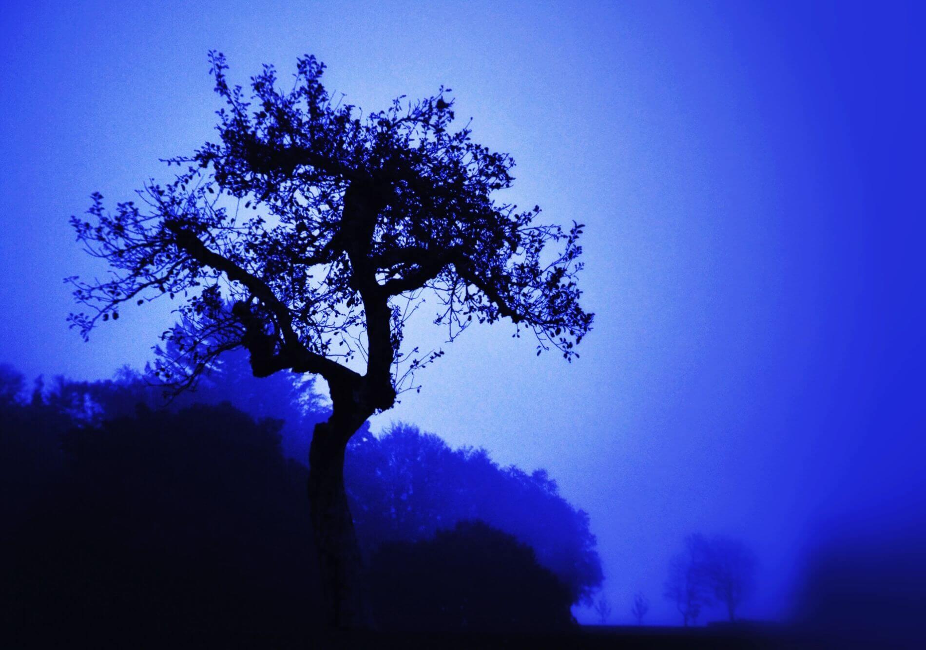 Eckhard Ischebeck Gewächse - Baum in Blau
