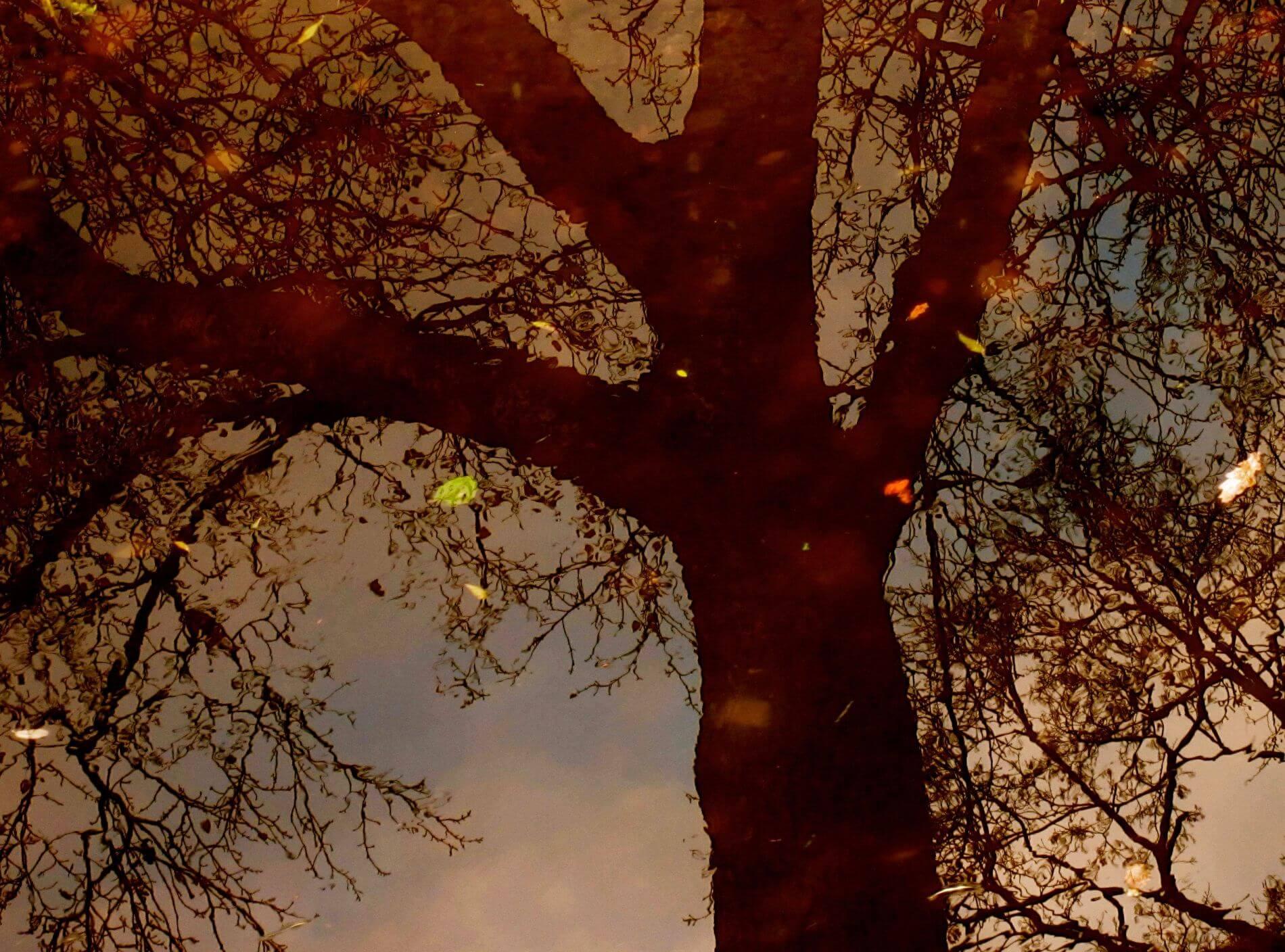 Eckhard Ischebeck Gewächse - Der Herbst, der trügerische