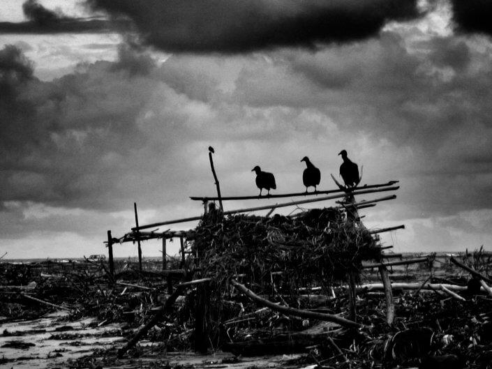 Black Bird Society